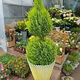 大형花盆가리개花盆가리개花盆커버플랜트커버큰나무花盆가리개|