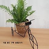 [꽃대통령]소품 자전거 거치대 [기획상품] 