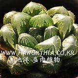청초(淸楚)-01-23-No.1374|