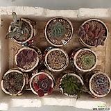 모듬 10종 화분포함 심은채로배송|
