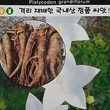 백도라지씨앗|