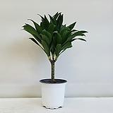 콤펙타/콤팩타/공기정화식물/인테리어/반려식물