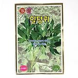 빈혈 진통 부인병에 효과 있는 일당귀 씨앗 채소씨앗 식용식물|