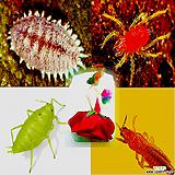 싱싱싹자바-깍지벌레,진딧물,응애를 한번에 친환경 유기농 살충제|