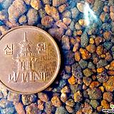 동생사 500ml-분갈이용토|