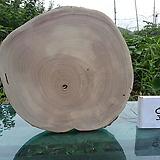 통나무슬라이스(박쥐란,틸란드시아diy용)0915spxp6|Tillandsia