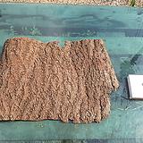 수피(나무껍질-풍란,틸란드시아용)0918xp9|Tillandsia
