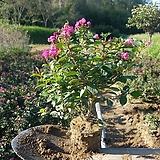 꽃이 앙증맞고 예쁜 미니백일홍 10주 한셑|