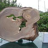 우드슬라이스(틸란드시아펜던트,기타원예자재용)0609spxp2|Tillandsia