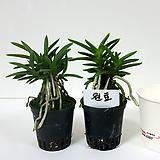 원효 (2포트) 