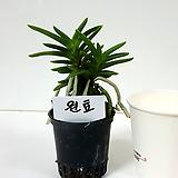 원효(1포트) 