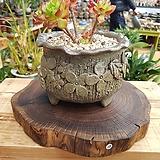 국산 향나무받침(20)|