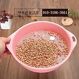 하월시아(다육식물) 배양토 소(小) 립