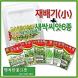 [소]새싹재배기 새싹씨앗6종 체험학습 자연학습/원예자재행복한꽃그릇 행복상회|