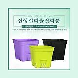 신상칼라슬릿플분 플라스틱화분 슬릿화분 하월시아화분 행복한꽃그릇 행복상회|haworthia