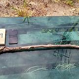 연수목(감태나무)diy원예자재 sp-4887-9|