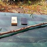 연수목(감태나무)diy원예자재 sp-4891-12|