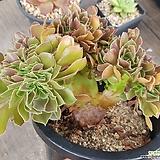 샐러드볼철화|Salad bowls