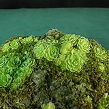 석부작(벌레잡이제비꽃)|