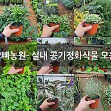 오빠농원- 실내 공기정화식물 모음|