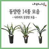 동양란모음/동양란/서양란/난/식물/나라아트|