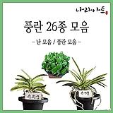 난모음/풍란/석곡/동양란/서양란/식물/공기정화식물/난농장/나라아트|