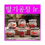 딸기공장Jr.6종모둠 다육이화분 인테리어화분 수제화분 행복상회 행복한꽃그릇|