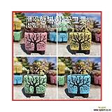 수제화분봄바람Ⅱ시멘트화분/다육화분/인테리어화분/행복상회/행복한꽃그릇|Handmade Flower pot