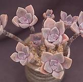 紫色喜悅(合并)|