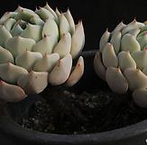 种植实验(314-41) 