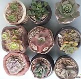 11合并9종花盆포함|