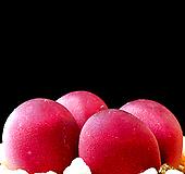 리톱스 루비씨앗 (20립) /리톱스씨앗|Lithops