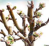 주렁주렁열매-애기사과나무 