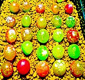 리톱스 믹스 씨앗(100립)-280여종이 섞여 있어요/리톱스씨앗/다육이 씨앗|Lithops