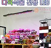 다육식물 전용 LED 테라 강력추천 테라600, 1200 (신규입고)|
