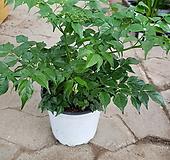 해피트리 대박나무02 happy tree
