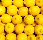 외목수형 레몬트리♥노란열매 열리는 오리지널 레몬나무|