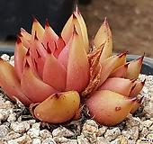 꽃별 9401-9653|