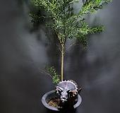 티트리나무 대품 공기정화식물 공룡꽃식물원 795|