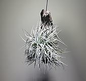 나무코튼캔디걸이/코튼캔디/354519910/공룡꽃식물원|
