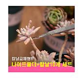 교체형나이프 다육이적심용나이프 원예용나이프 