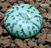옵코델룸코노피튬(성체컷팅뿌리내림) Conophytum