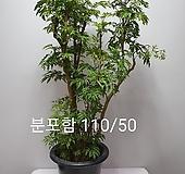 한목대 폴리셔스대품/동일품배송  