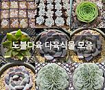 홍치아철화 묵은둥이-55