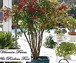사계절 볼거리를 제공하는 남천 화분상품♥남천나무