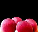 리톱스 루비씨앗 (20립) /리톱스씨앗