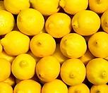 레몬트리 외목수형♥노란열매 열리는 오리지널 레몬나무