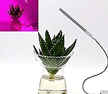 LED등 4.7W USB타입♥다육식물&수생식물♥스텐드 식물생장등