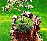 다육식물 천연나무화분 M