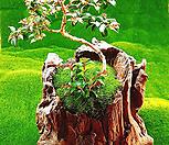 다육식물 천연나무화분 L